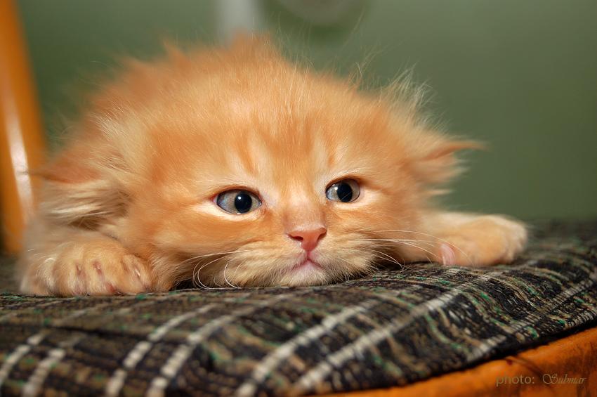 Прикольные картинки сильно скучаю по тебе, виде котов